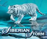 Siberian Storm image
