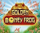 Golden Money Frog image