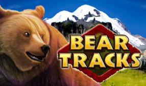 Bear Tracks image