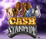 Cash Stampede image