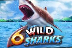 6 Wild Sharks image